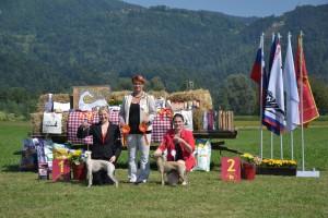 Desert-Queen-Italian-greyhounds-140