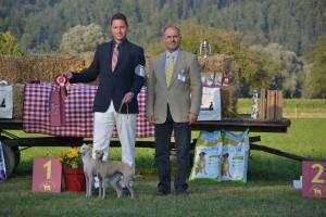 Desert-Queen-Italian-greyhounds-142