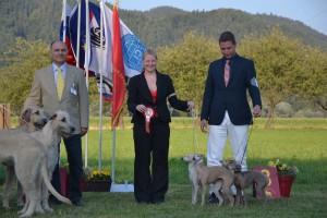 Desert-Queen-Italian-greyhounds-143